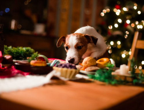 Pet Poisons Over the Christmas Season